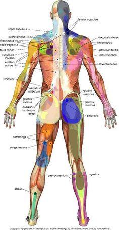 Santa Barbara Massage Therapy, Balance in Motion - Deep Tissue Massage, Trigger Point Massage, Myofascial Release, Tui Na, Barefoot Massage, Orthopedic Massage, Sports Massage, Lymphatic Drainage, Trigger Points back #deeptissuemassage
