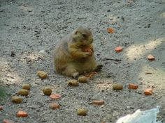 This fat chipmunk eating a very enjoyable feast in the sand.   29 Things That Are Way More Important Than Work Right Now