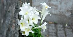 lily flowers - http://saigonflowersgifts.com