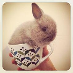 Don't drink me, human! I'm not tea! - January 16, 2013