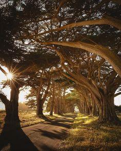 beautifuldestinationsTunnel of trees 👀 (📷: @aimhernandez)