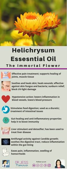 8 Uses For Helichrysum Essential Oil Helichrysum essential oil has the ability to lower inflammation. Learn about 8 uses and benefits of Helichrysum oil for a variety of conditions. Helichrysum Essential Oil Uses, Helichrysum Oil, Essential Oils For Skin, Young Living Essential Oils, Essential Oil Diffuser, Essential Oil Blends, Peppermint Essential Oil Benefits, Cedarwood Essential Oil Uses, Essential Oils For Inflammation