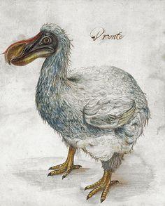 Иллюстрация XVII века, проданная на аукционе «Кристис»