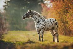 Amazing horse pictures #horses#horse#horselovers#horselove#lovinghorses#beautifulhorsepictures#horseriding#stunninghorses#beautifulhorses#loveforhorses#stallions#polopony#pony#whitehorses#equestrian#marwarihorse#marwari#thoroughbred#ponies#horsepictures#horsephotography#horsebackriding#LAPOLO Polo Horse, Beautiful Horse Pictures, Horse Training, Horse Breeds, Horse Photography, Thoroughbred, Horse Art, Equestrian, Pony