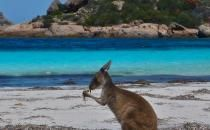 Get around with the Nullarbor Traveller 9 day Perth To Adelaide Tour.  $1450