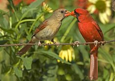 Northern Cardinals by Paul Brown - Help Bugs and Birds By Growing Native Plants