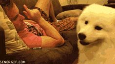 This is why they are man's best friends… .gif
