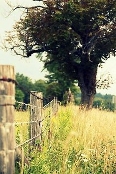 There is nothing quite like a rustic fence row with grass growed up on it in the summer time!