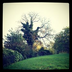 Whomping Willow - Hyde Park.