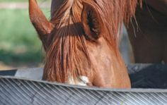 Help your horse stay hydrated on the trail with these tips from The Trail Rider Magazine: http://trailridermag.com/article/keep-your-horse-drinking-trail-15146