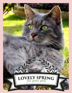 "Zolux joins Yummypets and offers you many prizes to win! For a chance to win, it's very simple, follow the steps below: Follow Zolux on Pinterest: http://ymp.io/u/Dlm - Follow Yummypets on Pinterest: http://ymp.io/u/tvb - Follow the board ""Lovely spring for your pets !"": http://ymp.io/u/sei - Repin the products that you would like to win - Results on April 13th 2015. GOOD LUCK! #game #pets #cat #dog #bird #fish #rodent #bunny #puppy #kitty #kitten #gift #pinterest #yummypets #zolux"