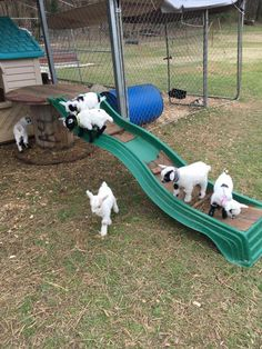 Ziegenstall Goat farming Using Lawnmowers To Build And Mark Tennis Courts To build a tennis court pr Mini Goats, Cute Goats, Baby Goats, Keeping Goats, Raising Goats, Zoo Animals, Cute Animals, Pigmy Goats, Goat Playground