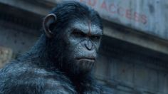 http://yenisafaria224.wordpress.com/2014/07/14/free-online-watch-dawn-of-the-planet-of-the-apes/ Watch Dawn of the Planet of the Apes Online Putlocker humanity has fallen from its perch. As the opening credits glide by, the fate of our species