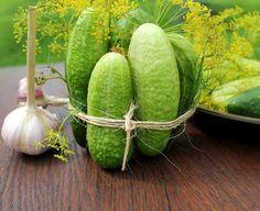 Этот овощ и в свежем виде хорош, и в соленом или маринованном — желанное угощение на столе. Давайте сегодня поговорим о тех важных нюансах и тонкостях, которые помогают огороднику получать знатный уро…