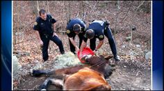WJHL.com - Man charged after dead horse found hanging from tree
