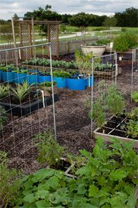 Theresa Badurek, Urban Horticulture Agent, UF/IFAS Extension Are you growing a spring vegetable garden- or thinking about taking the plunge? Let's take a look at the tools you need to help maintain a successful... Read More