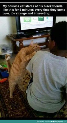 Stupid racist cat