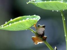 cute frogs - Google Search