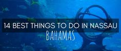 Here are 14 of the best things to do in Nassau, the capital of Bahamas. This amazing island country will keep you busy for days!