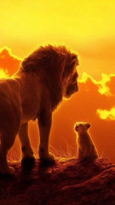 The Lion King, Mufasa, Simba, Wallpaper Le Roi Lion Film, Le Roi Lion 2, Le Roi Lion Disney, Disney Lion King, Lion King Quotes, Lion King Art, Lion King Movie, Lion Art, The Lion King Musical