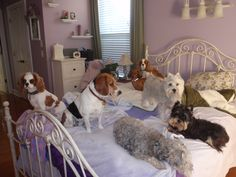 "Some of my guests hanging out on the ""Big Bed"""
