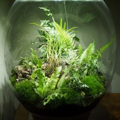 terrarium on pinterest. Black Bedroom Furniture Sets. Home Design Ideas