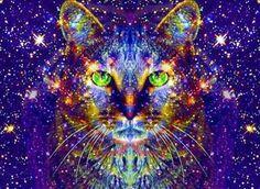 Blog da Beki Bassan - Reflexões: Os Gatos são nossos Protetores