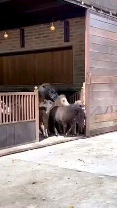 Dogs, Animals, Horses, Animales, Animaux, Pet Dogs, Doggies, Animal, Animais