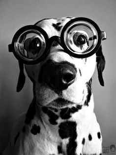 goggles for pup