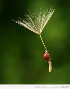 parachuting lady bug
