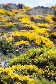 Primavera en Pico Cervero. Fotografía: Tuszapatosrojos