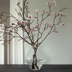 Tulip Magnolia Branches: Just Add Water: Gardenista