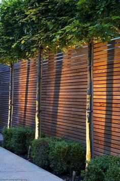 102 Marvelous Modern Front Yard Privacy Fences Ideas - All For Garden Trees For Front Yard, Modern Front Yard, Front Yard Fence, Front Yard Landscaping, Landscaping Ideas, Backyard Fences, Garden Fencing, Fence Design, Garden Design
