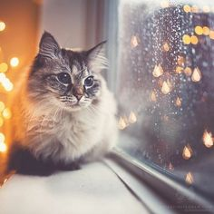 9 Tips For Choosing The Best Cat Urine Cleaner Cute Cats And Kittens, Baby Cats, Cool Cats, Kittens Cutest, Funny Kittens, Pretty Cats, Beautiful Cats, Cute Cat Wallpaper, Gatos Cats