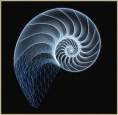 geometry of nautilus Nautilus Tattoo, Logarithmic Spiral, Spirals In Nature, Spiral Tattoos, Divine Proportion, Geometric Nature, Geometric Designs, Nautilus Shell, Math Art