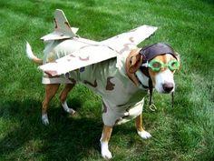 perro volador!!!