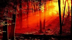 """VIVALDI """"The Four Seasons"""" -  Autumn - YouTube"""