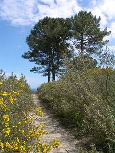 Forêt de Pinia à Ghisonaccia (Corse)