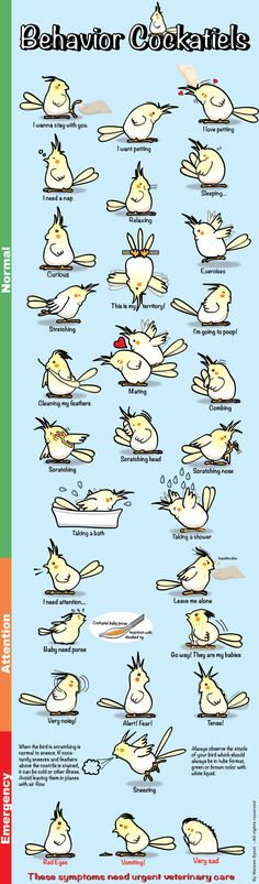 Behavior guide for cockatiels  This'll be good for when I get mine