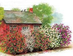 Heckenpflanzen - New Ideas Hedge Trees, Evergreen Hedge, Garden Trees, Trees And Shrubs, Herb Garden Design, Diy Herb Garden, Backyard Garden Design, Backyard Landscaping, Hedges