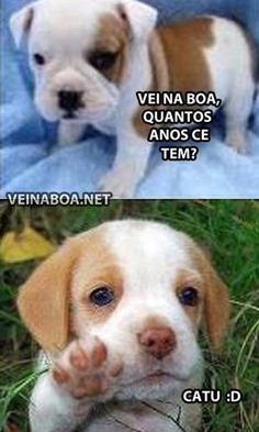 aaaaaaah que foofo Animals And Pets, Baby Animals, Funny Animals, Cute Animals, Top Memes, Funny Memes, Cute Puppies, Cute Dogs, Memes Status