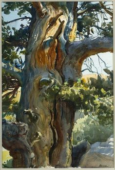 Ogden Minton Pleissner (1905-1983), Pinon Pine, date unknown, watercolor on paper. Bequest of Ogden M. Pleissner, 1984-17.12. Collection of Shelburne Museum