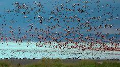 69 türde 200 bin kuşumuz var