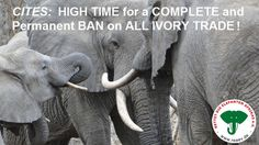 You can help save an elephant...High Time for a Complete and Permanent Ban on All Ivory Trade