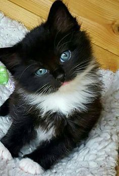 16+ Cutest Kittens of the day
