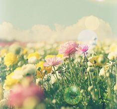 flower days | Flickr - Photo Sharing!