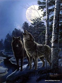 A dark wolf stares meanly with his bright eyes, as the other howls at the full moon near a wavy creek. This is an artist proof print with a certificate of authenticity.