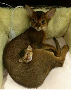 Magnifiques chats ❤