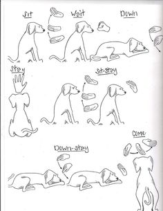 Rescue and shelter dogs, Freedom Tails Hand Signs and Commands