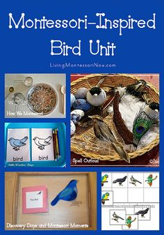 Montessori Inspired Bird Unit Study with FREE Printable - Homeschool Giveaways Montessori Preschool, Montessori Education, Preschool Science, Science Activities, Preschool Activities, Montessori Elementary, Elementary Teaching, Science Fun, Preschool Classroom